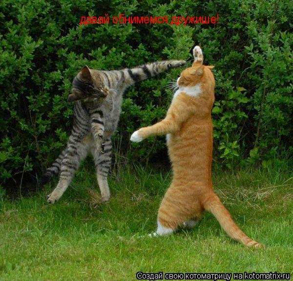 Котоматрица: давай обнимемся дружише!