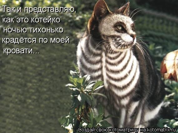 Котоматрица: Так и представляю, как это котейко ночью тихонько крадётся по моей кровати...