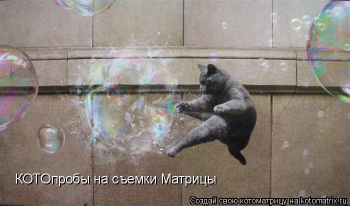Котоматрица: КОТОпробы на съемки Матрицы