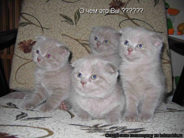 Продам Профессиональная помощь в продаже котят в Волгограде.