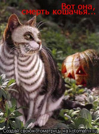 Котоматрица: Вот она,  смерть кошачья...