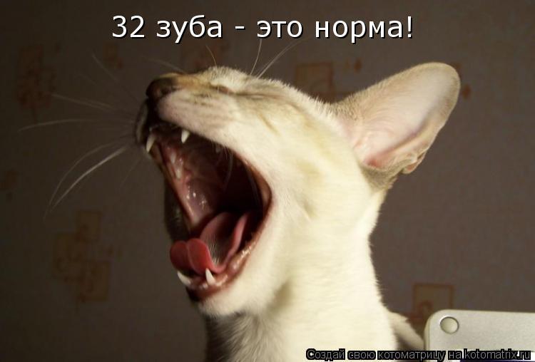 Котоматрица: 32 зуба - это норма!