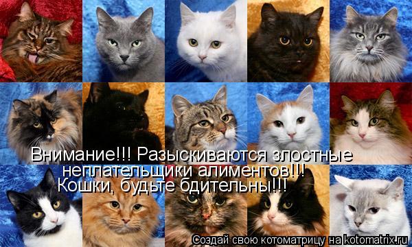 Котоматрица: Внимание!!! Разыскиваются злостные  неплательщики алиментов!!! Кошки, будьте бдительны!!!