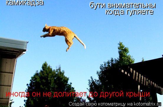 Котоматрица: камикадза бути внимательны когда гуляете  иногда он не долитает до другой крыши