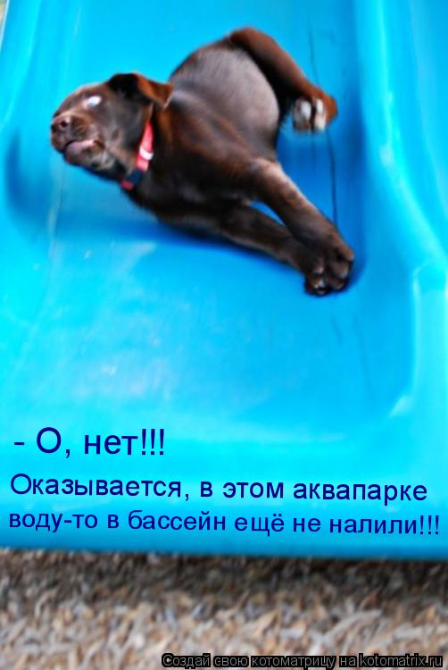Котоматрица: - О, нет!!!  Оказывается, в этом аквапарке  воду-то в бассейн ещё не налили!!!