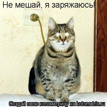 Котоматрица: Не мешай, я заряжаюсь!