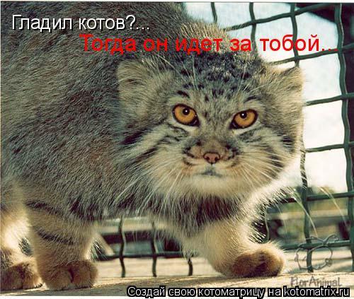 Котоматрица: Гладил котов?... Тогда он идет за тобой...