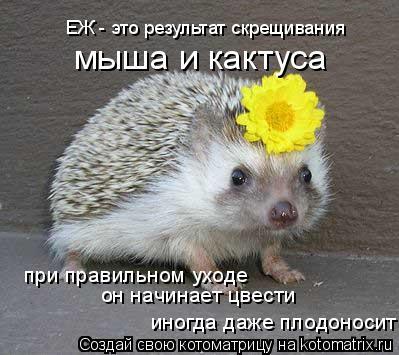 Котоматрица: ЕЖ - это результат скрещивания мыша и кактуса при правильном уходе он начинает цвести иногда даже плодоносит