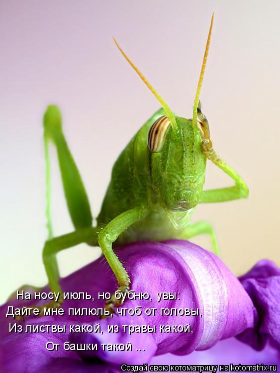 Котоматрица: На носу июль, но бубню, увы:  «Дайте мне пилюль, чтоб от головы, Из листвы какой, из травы какой,  От башки такой ...