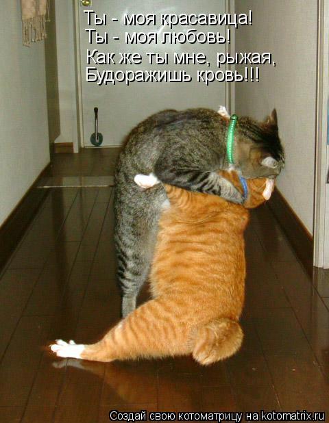 Котоматрица: Ты - моя красавица! Ты - моя любовь! Как же ты мне, рыжая, Будоражишь кровь!!!