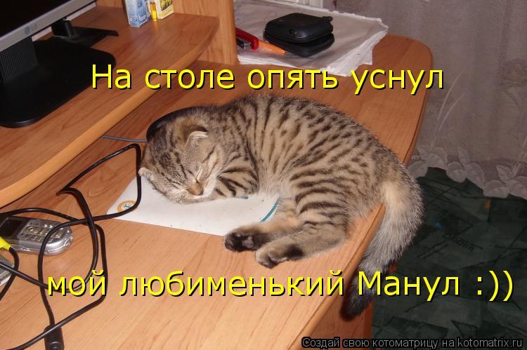 Котоматрица: На столе опять уснул мой любименький Манул :))