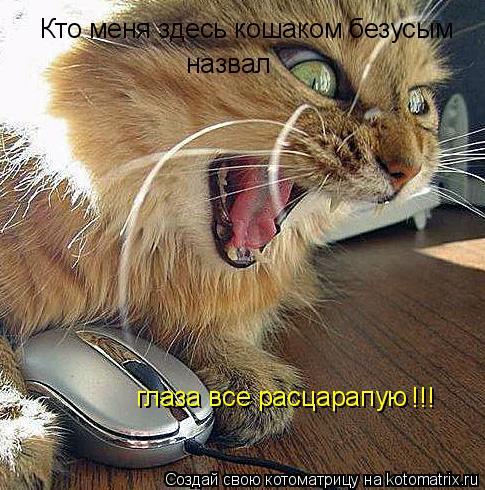 Котоматрица: Кто меня здесь кошаком безусым назвал глаза все расцарапую !!!