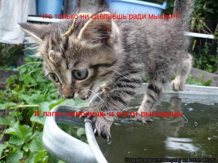 Котоматрица: Что только ни сделаешь ради мышки!!! И лапы намочишь и когти вытащишь
