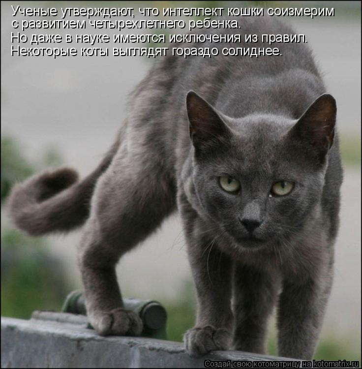 Котоматрица: Ученые утверждают, что интеллект кошки соизмерим  с развитием четырехлетнего ребенка.  Но даже в науке имеются исключения из правил.  Некот