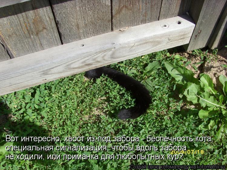 Котоматрица: Вот интересно, хвост из-под забора - беспечность кота,  специальная сигнализация, чтобы вдоль забора  не ходили, или приманка для любопытных