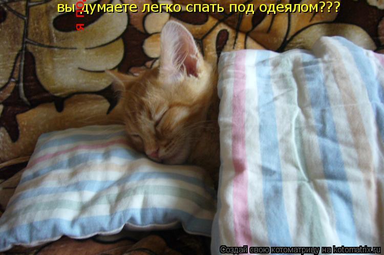 Котоматрица: вы думаете легко спать под одеялом???  я под него ТРИ ДНЯ ЗАЛАЗИЛ!!!