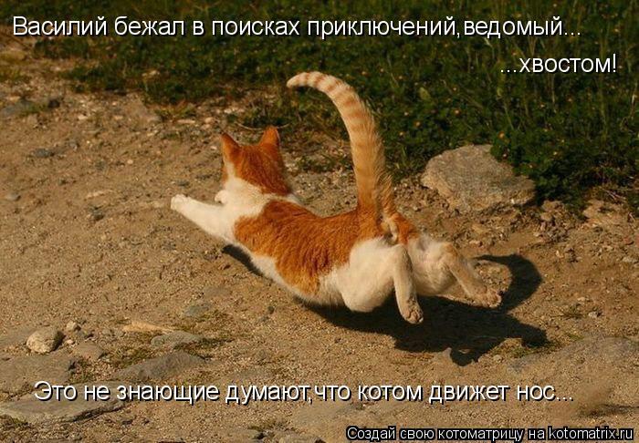 Котоматрица: Василий бежал в поисках приключений,ведомый... ...хвостом! Это не знающие думают,что котом движет нос...
