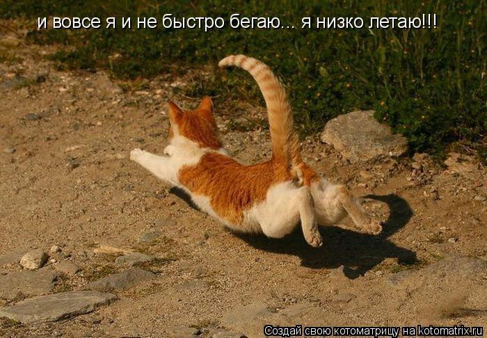 Котоматрица: и вовсе я и не быстро бегаю... я низко летаю!!!