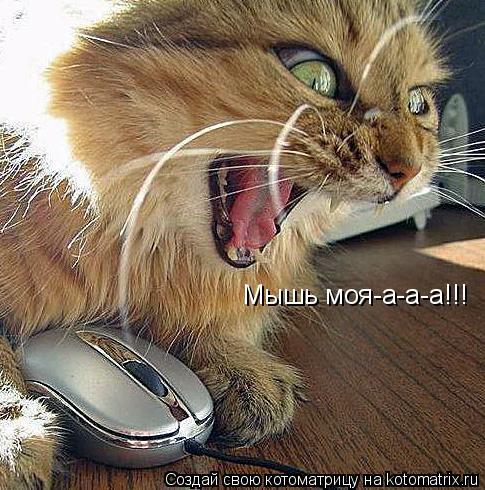 Котоматрица: Мышь моя-а-а-а!!!