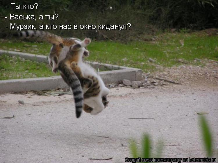 Котоматрица: - Ты кто? - Васька, а ты? - Мурзик, а кто нас в окно киданул?