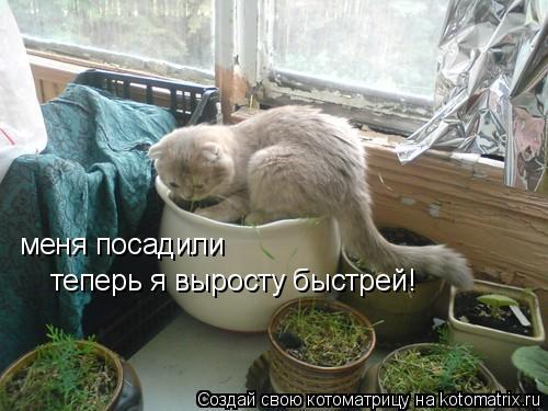 Котоматрица: меня посадили  теперь я выросту быстрей!