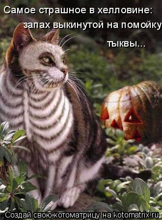 Котоматрица: Самое страшное в хелловине: запах выкинутой на помойку тыквы...