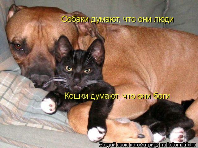 Котоматрица: Собаки думают, что они люди Кошки думают, что они боги