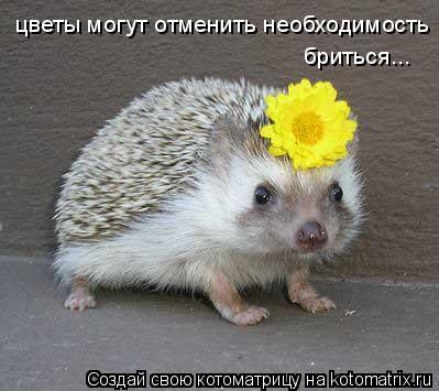 Котоматрица: цветы могут отменить необходимость бриться...