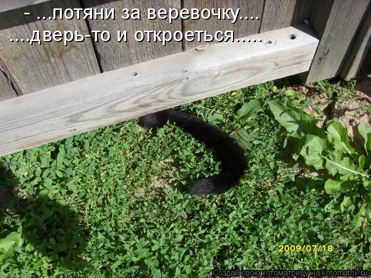 Котоматрица: - ...потяни за веревочку.... ....дверь-то и откроеться.....