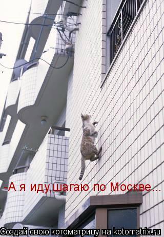 Котоматрица: -А я иду,шагаю по Москве...