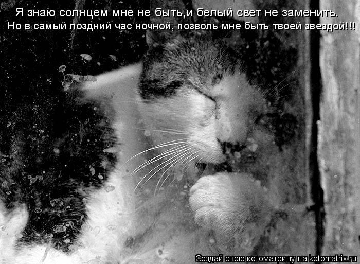 Котоматрица: Я знаю солнцем мне не быть,и белый свет не заменить. Но в самый поздний час ночной, позволь мне быть твоей звездой!!!