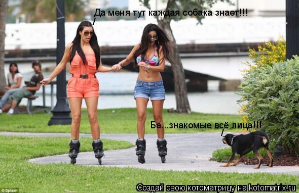 Котоматрица: Да меня тут каждая собака знает!!! / / Ба...знакомые всё лица!!!