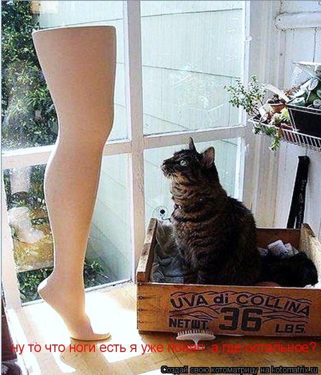 Котоматрица: ну то что ноги есть я уже понял..а где остальное?