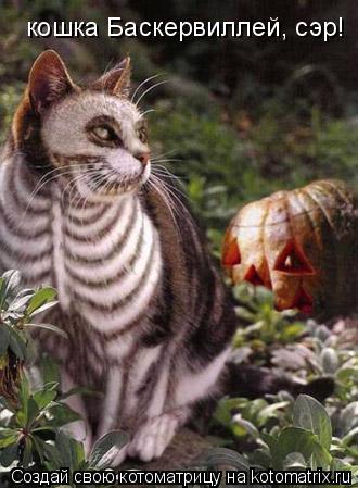 Котоматрица: кошка Баскервиллей, сэр!
