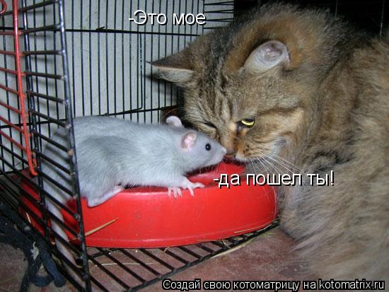 Котоматрица: -Это мое -да пошел ты!