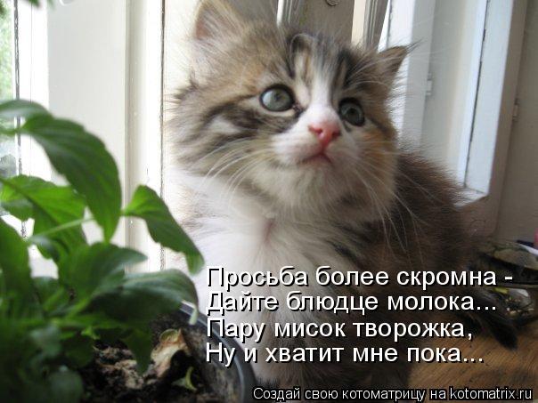 Котоматрица: Просьба более скромна - Дайте блюдце молока... Пару мисок творожка, Ну и хватит мне пока...