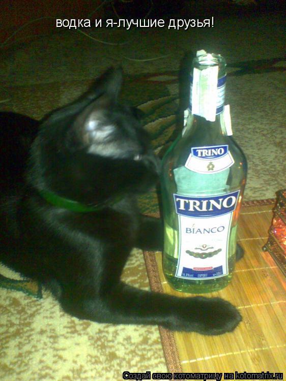 Котоматрица: водка и я-лучшие друзья!