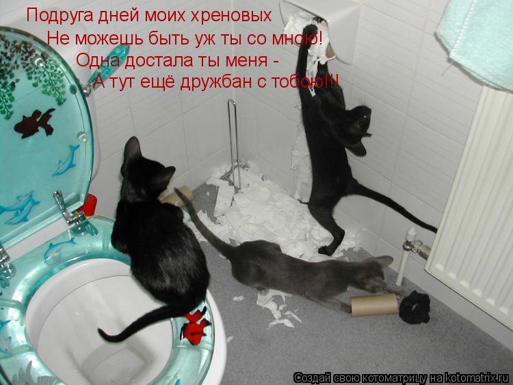 Котоматрица: Подруга дней моих хреновых Не можешь быть уж ты со мною! Одна достала ты меня - А тут ещё дружбан с тобою!!!