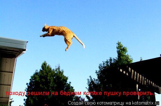 Котоматрица: походу решили на бедном котике пушку проверить..