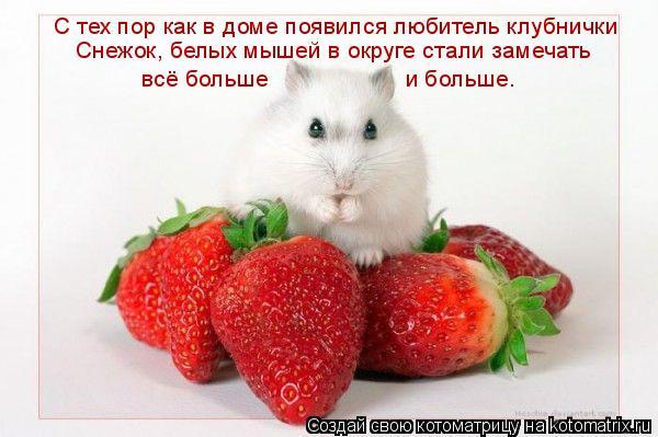 Котоматрица: С тех пор как в доме появился любитель клубнички  Снежок, белых мышей в округе стали замечать  всё больше  и больше.