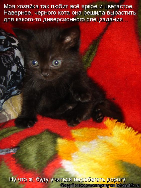 Котоматрица: Моя хозяйка так любит всё яркое и цветастое.  Наверное, чёрного кота она решила вырастить  для какого-то диверсионного спецзадания... Ну что