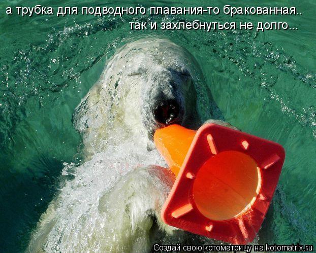 Котоматрица: а трубка для подводного плавания-то бракованная.. так и захлебнуться не долго...