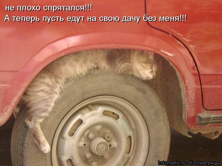 Котоматрица: не плохо спрятался!!! А теперь пусть едут на свою дачу без меня!!!