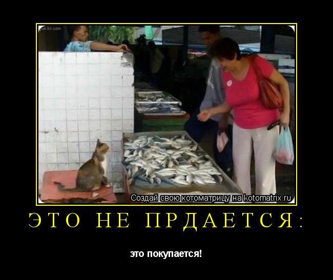 Котоматрица: это не прдаётся: это покупается!