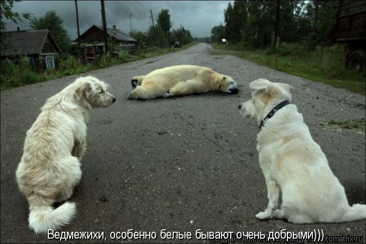 Котоматрица: Ведмежихи, особенно белые бывают очень добрыми)))