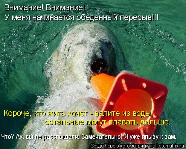 Котоматрица: Внимание! Внимание! У меня начинается обеденный перерыв!!! Короче, кто жить хочет - валите из воды,  остальные могут плавать дальше. Что? Ах. вы
