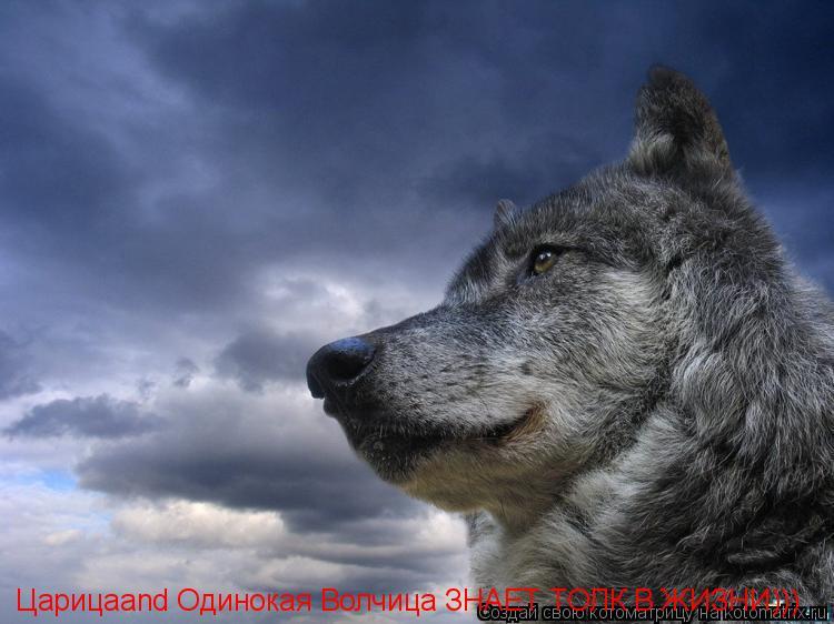 Котоматрица: Царицаand Одинокая Волчица ЗНАЕТ ТОЛК В ЖИЗНИ)))
