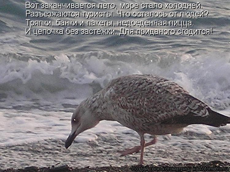 Котоматрица: Вот заканчивается лето, море стало холодней. Разъезжаются туристы. Что осталось от людей? Тряпки, банки и пакеты, недоеденная пицца… И цепо