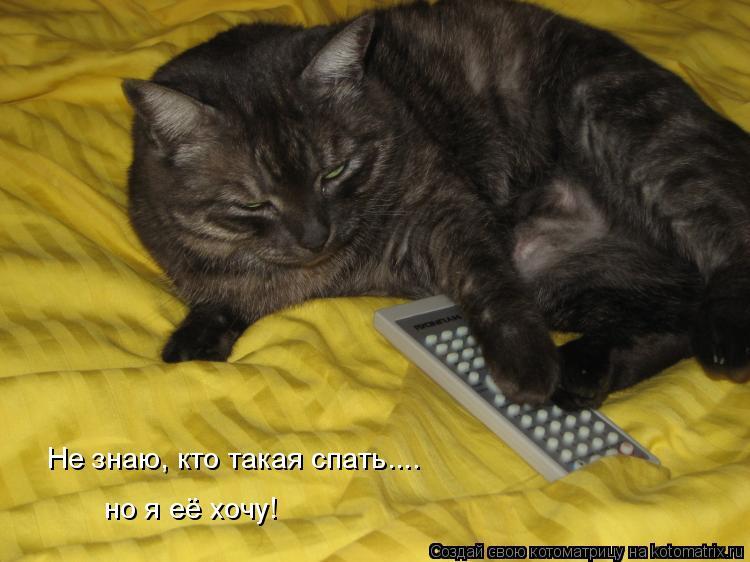 Котоматрица: Не знаю, кто такая спать.... но я её хочу!