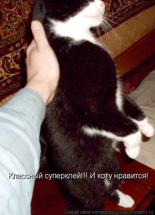 Котоматрица: Классный суперклей!!! И коту нравится!